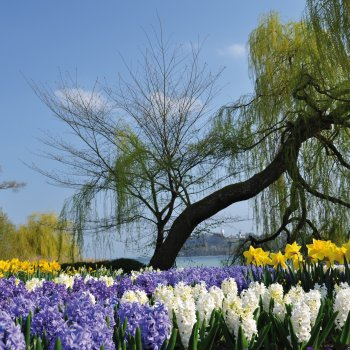 Blumeninsel Mainau © bonline - fotolia.com